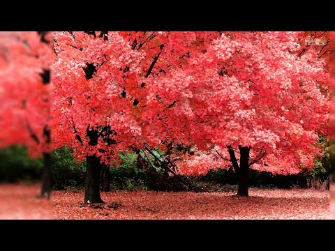 Beautiful Autumn Forest - Beautifull Fall Leaf Colors