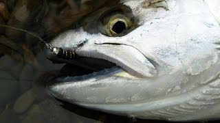 Ловля симы на Сахалине.(Видео ролик с наших рыбалок на симу. Удивительный лосось, очень хорошо отзывается практически на все приман..., 2015-12-19T12:26:02.000Z)