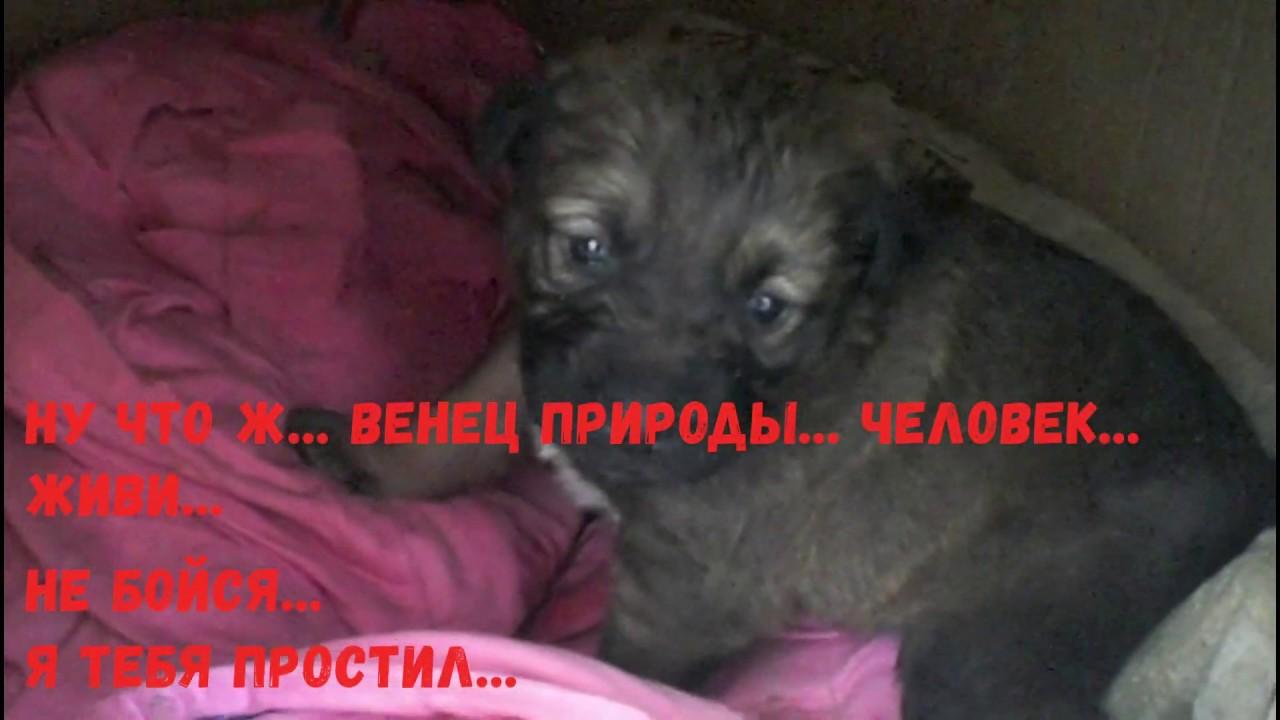 Собака и щенок живут в остановке ИХ БОЛЬШЕ НЕТ!!! - YouTube