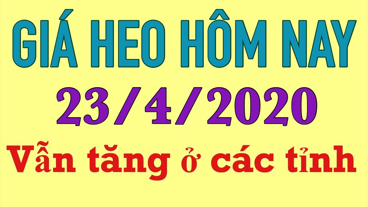 Giá heo hơi hôm nay 23/4/2020 || Vẫn tăng đều ở các tỉnh