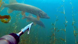 Это невозможно забыть😨. В одном озере с древними крокодилами Тувы 2019 (часть 1)