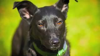 Лиза Собака в добрые руки(Лиза- это собака, которая даст Вам возможность почувствовать, что Вы особенный) так как она любит только..., 2012-10-04T14:39:26.000Z)