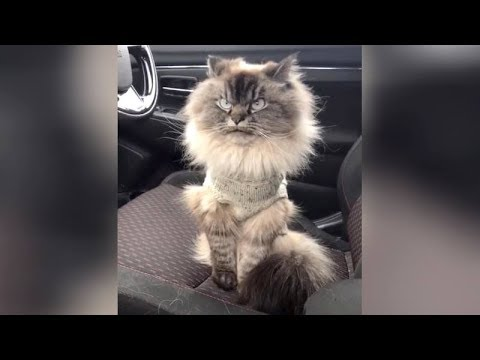 Heavy LAUGH ATTACK expected! // Funniest ANIMALS of the month!