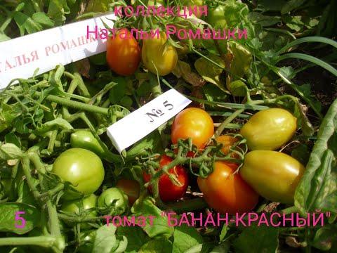 Сроки посева семян для помидор, разных сортов - от Натальи Ромашки