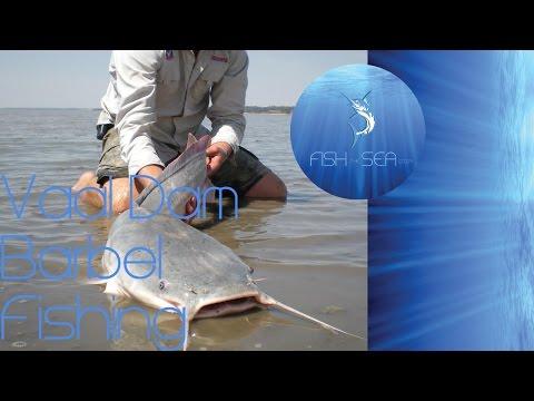 Deadliest Cats | Vaal Dam Barbel (Catfish) Fishing | Fish The Sea