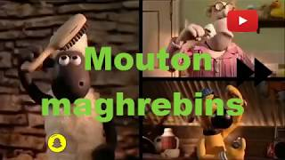 mouton Maroc vs Algerie vs tunisie vs Mauritanie lequel choisir ??عيد الأضحى sheep
