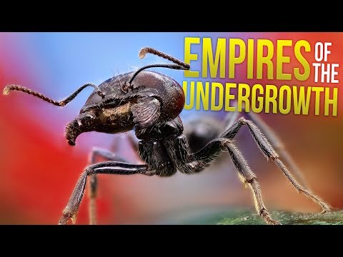 My Giant Ant Colony! - Ant Colony vs Beetles - Empires of the Undergrowth Gameplay Part 1