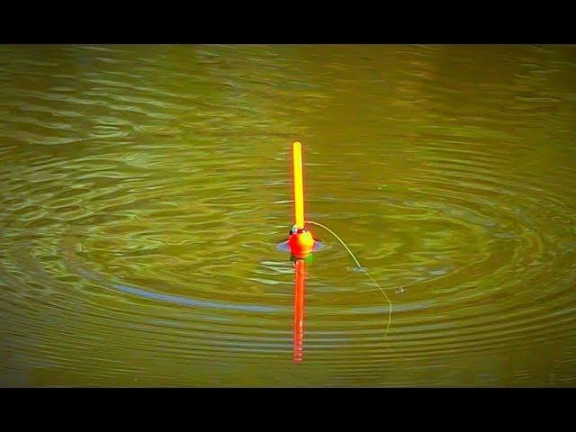 Ловля карася на поплавочную удочку в пруду и на реке