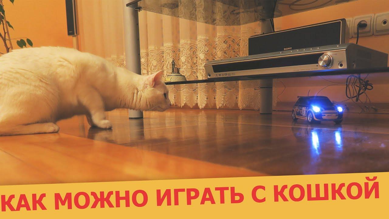 Играть с котом надо как