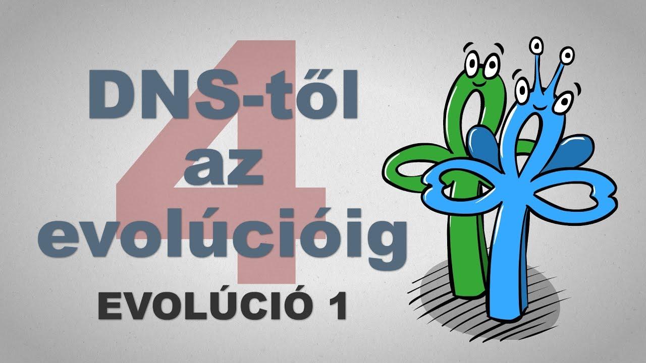 A DNS-től az evolúcióig - csak egyszerűen (4. rész)