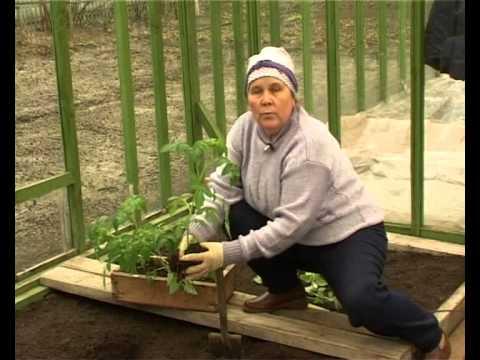 Климцева луиза ниловна огород своими руками видео