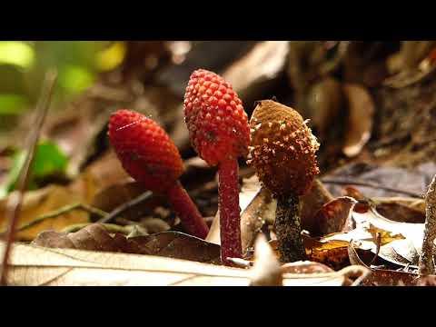 Rain Forest Journal