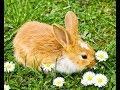 rabbit / Rabit Pet Rabbit Animal Pictures/funny baby rabit