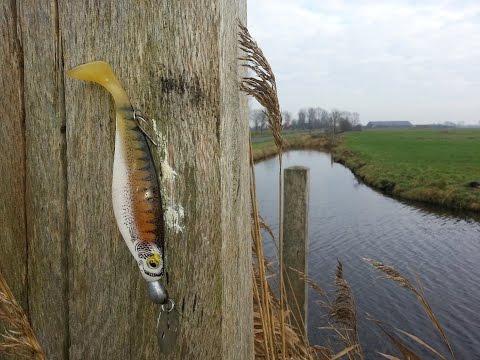 Vissen op Snoek met nieuw kunstaas de Chatter Shad.