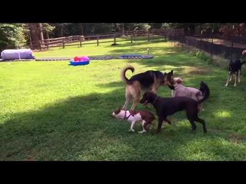 Dana's Dog Care Puppy Play