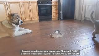 Собака, кот и крыса!!!