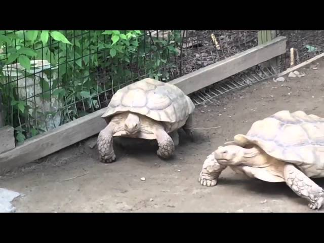 Turtle Rescues His Stranded Friend