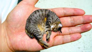 20 Smallest Cat Breeds In The World