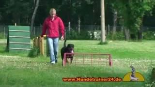 Hundeschule Uwe Krüger Rottweiler Yara Vom Elbschlösschen Mit Wesenstest