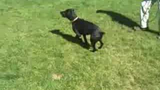 *adopted* Wilma 5844214 Humane Society Colorado Adopt