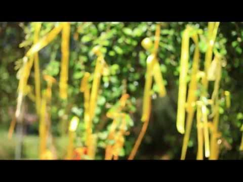 Tie A Yellow Ribbon 'Round The Old Oak Tree lyrics - Tony ...
