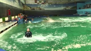 Дельфинарий на Крестовском острове(Test Video Sony Xperia S., 2012-04-16T21:16:55.000Z)