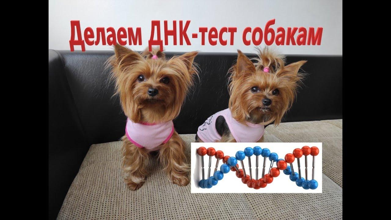 ДНК-тест для собак