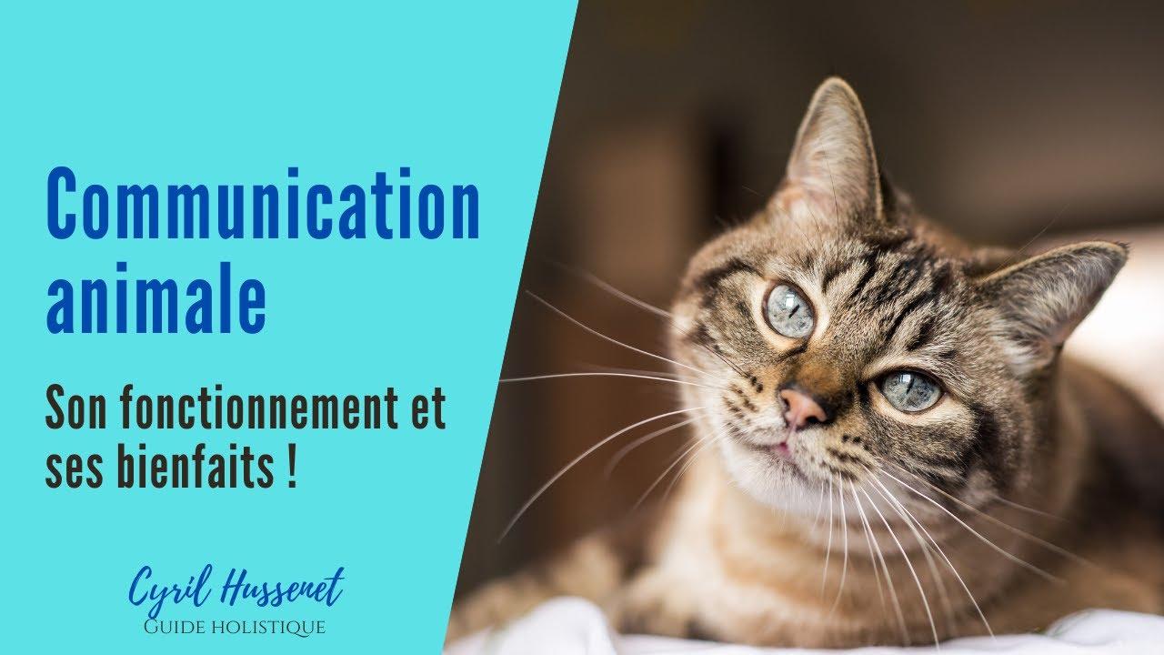 La communication animale : son fonctionnement et ses bienfaits !