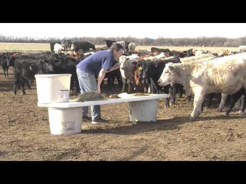 Cows Kitchen