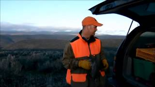 Tips For Gun Training A Young Upland Dog - Chukar Hunting