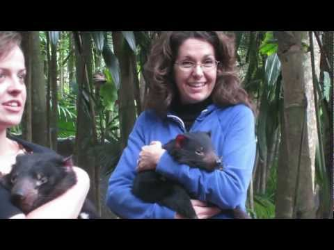 Tasmanian Devils Cuddle And Play With Visitors At The Australia Zoo