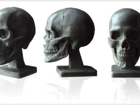 Anatomical Models for Artist Reference