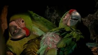 Almendro Tree of Life and Great Green Macaw