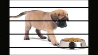 товары для животных оптовые базы