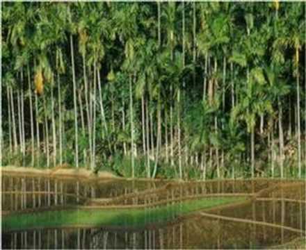 Sri Lankan Tourism Slide Show