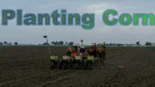 Amish Farmer Planting Corn