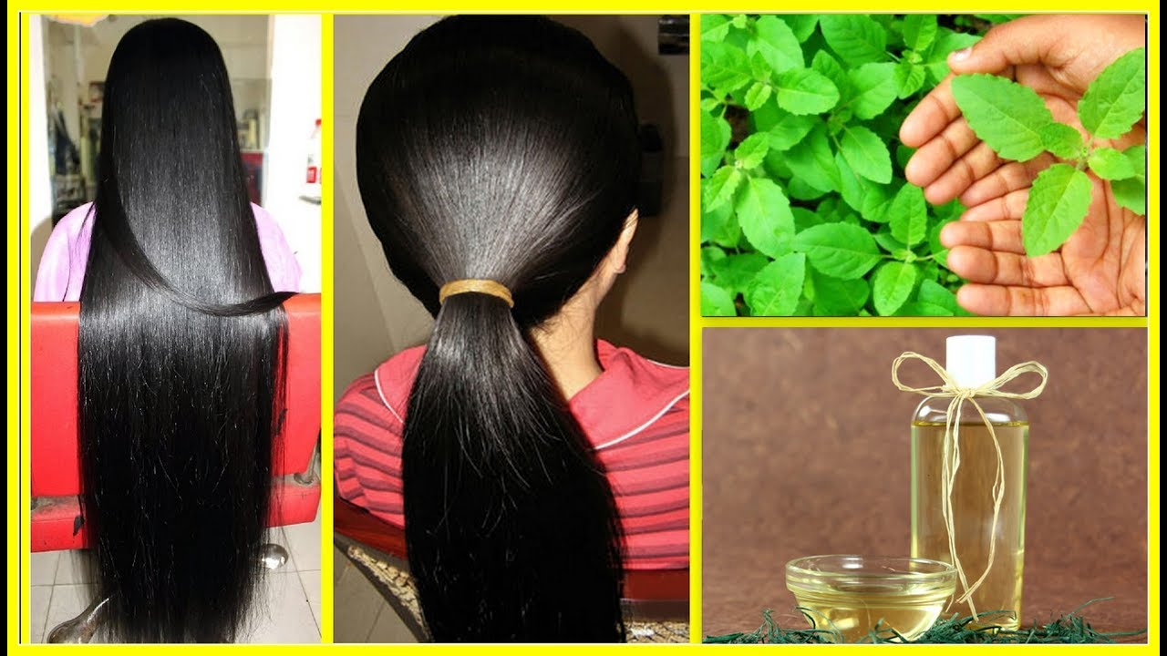 Tulsi Hair Oil  I Promise That After Using This Your Hair Will Never Stop  Growing / DIY Hair Oil
