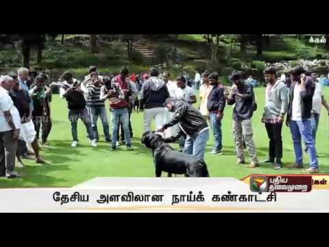 Dog Show In Kodaikanal