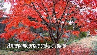 Императорские сады в Токио открылись всего на несколько дней / Imperial Gardens in Tokyo / 東京皇居