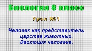Биология 8 класс (Урок№1 - Человек как представитель царства животных. Эволюция человека.)