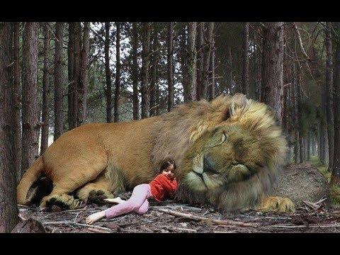 ये जंगली जानवर फ़रिश्ते बनकर आए थे | Wild Animals Who Have Saved Humans Mp3