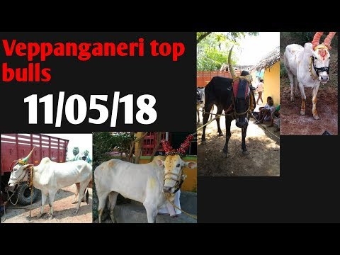 Veppanganeri top bulls running video MLA, Bollreddiyar, NTR, vnb super star, chandhu