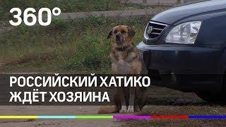В России есть свой Хатико, который ждёт хозяина в городе Тутаеве
