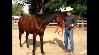 "Rehabilitating the ""Tripping"" Horse. ""Tahota"" 3yo TB. Sean Davies, Coloradoreinsman thumbnail"