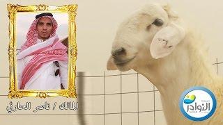 عرض المالك/ ناصر بن حسن الحارثي