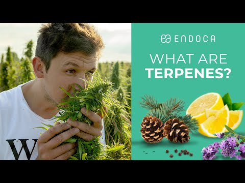 What Are Terpenes And What Do Terpenes Do?
