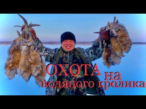 Охота на водяного кролика Якутия