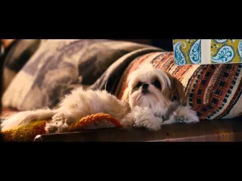 Trailer do filme Sete Psicopatas e um Shih Tzu