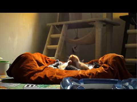 cats waking up and falling asleep 1080p HD  Across The Ocean JR Tundra