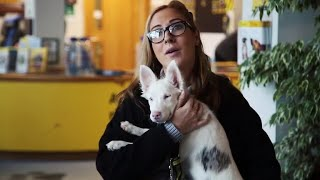 Dogs Trust issue Christmas appeal to help find a home for blind and deaf pup